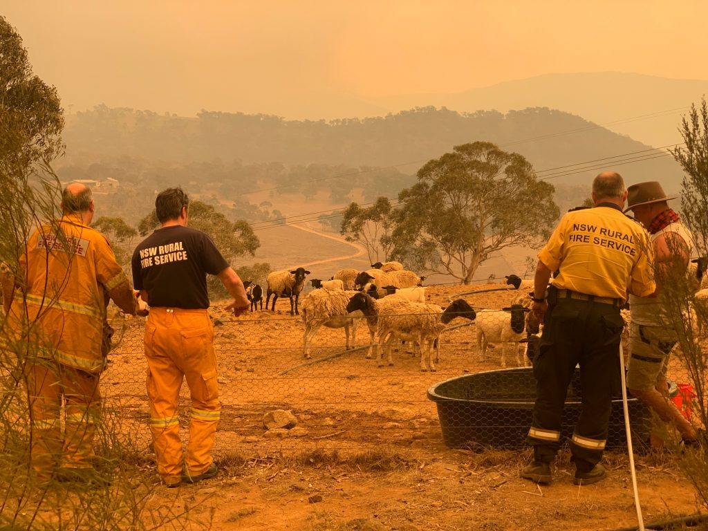Clear Range Fire, checking on the sheep